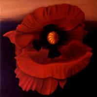 Desert Poppy Anni Adkins