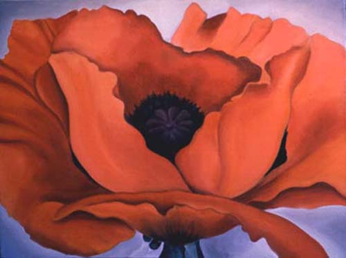 Georgia's Poppy - Flower Painting by Anni Adkins